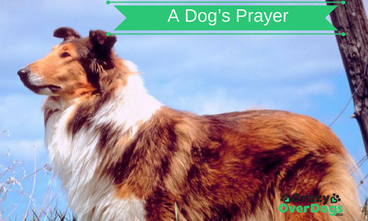 A Dogs Prayer - One Of The Most Beautiful Poems I Have Read
