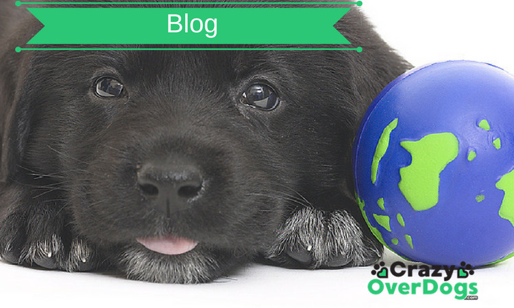 Crazy Over Dogs Blog