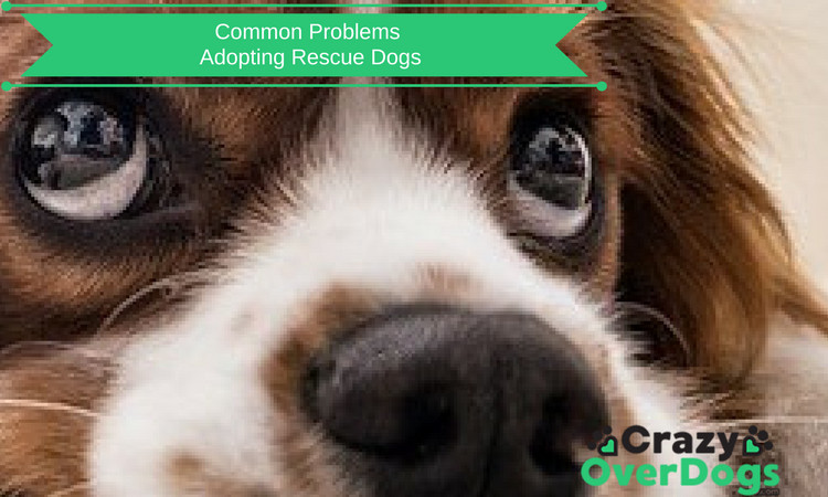 Common Problems Adopting Rescue Dogs