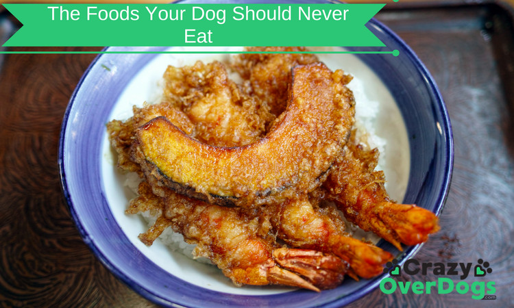 The Foods Your Dog Should Never Eat - This Will Surprise You