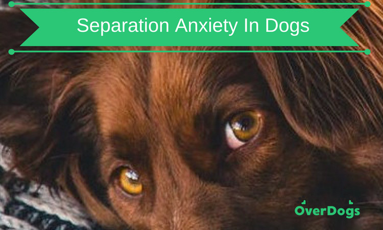 Separation Anxiety in Dogs - Do You Recognize Any Of These Symptoms