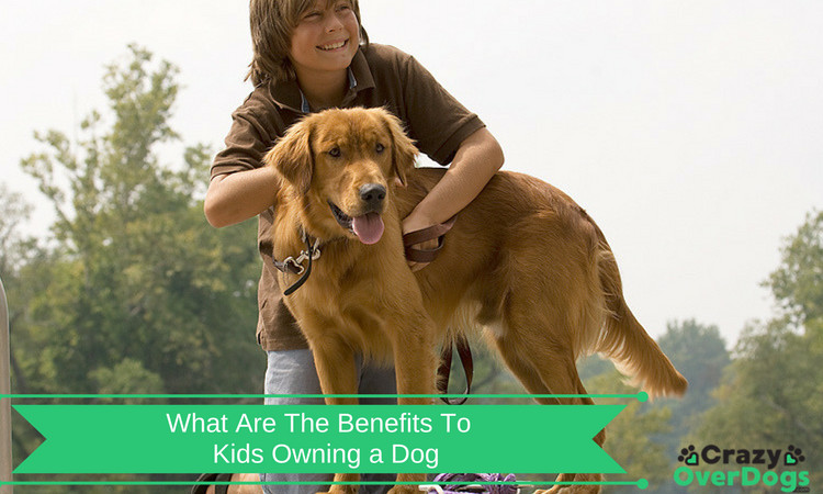 What Are The Benefits To Kids Owning a Dog