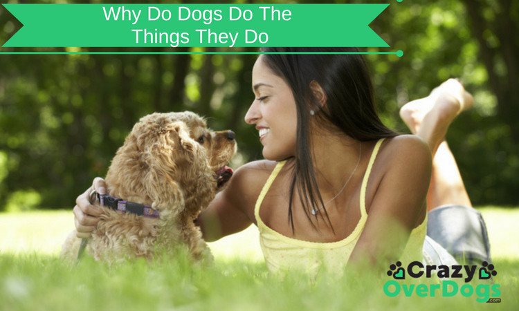 Why Do Dogs Do The Things They Do - Discover The Secrets
