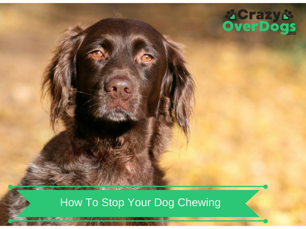 How To Stop Your Dog Chewing - The Furniture Is So Expensive