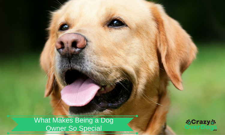 Dog Lovers - What Makes Being a Dog Owner So Special