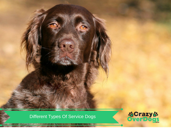 What Are Service Dogs - The Important Things That They Do