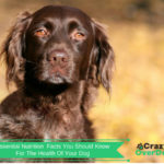 Essential Dog Nutrition Facts You Should Know For The Health Of Your Dog