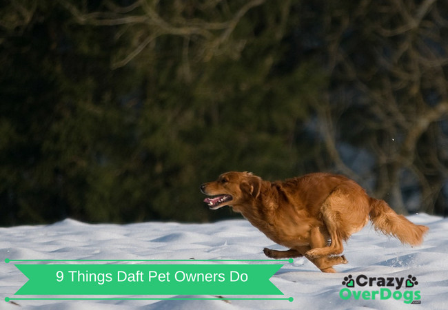 9 Things Daft Pet Owners Do - Do You Do Any Of Them..