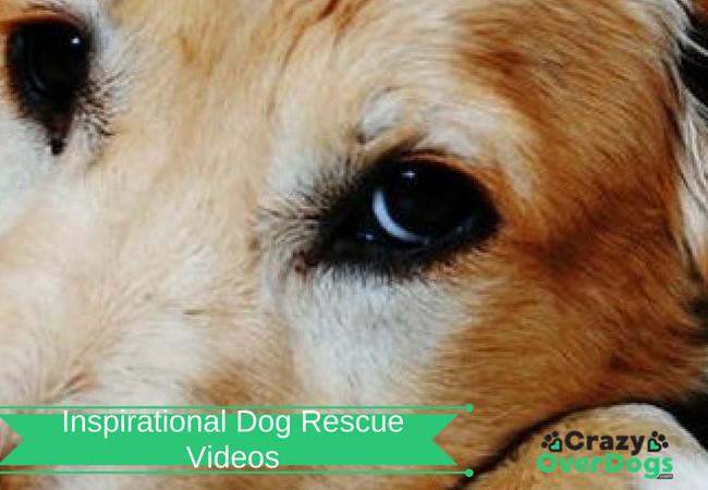 Inspirational Dog Rescue Videos