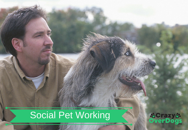 What Is Social Pet Working Month - Have You Ever Considered Dog Sharing