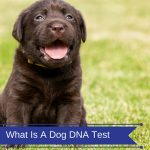 What Is A Dog DNA Test