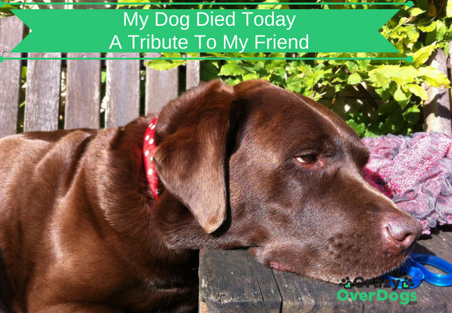 My Dog Died Today - A Tribute To My Friend
