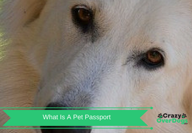 What Is A Dog Passport - Why You Should Get One For Your Dog