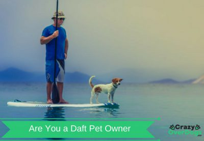 Fun Dog Quiz - Are You a Daft Pet Owner