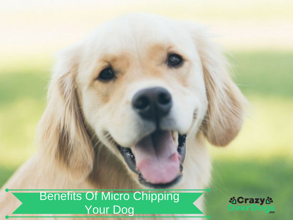 Benefits Of Microchipping Your Dog
