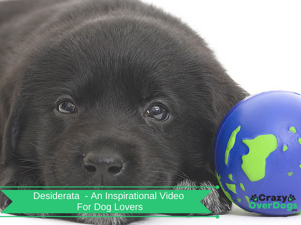 Desiderata Poem - An Inspirational Video For Dog Lovers