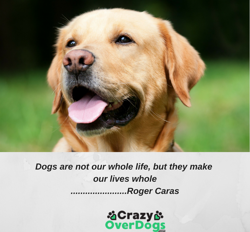 Inspirational Dog Quotes - Dogs are not our whole life, but they make our lives whole.......................Roger Caras