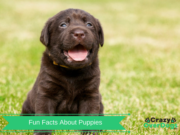 Fun Facts About Puppies - Bet You Can't Guess Them
