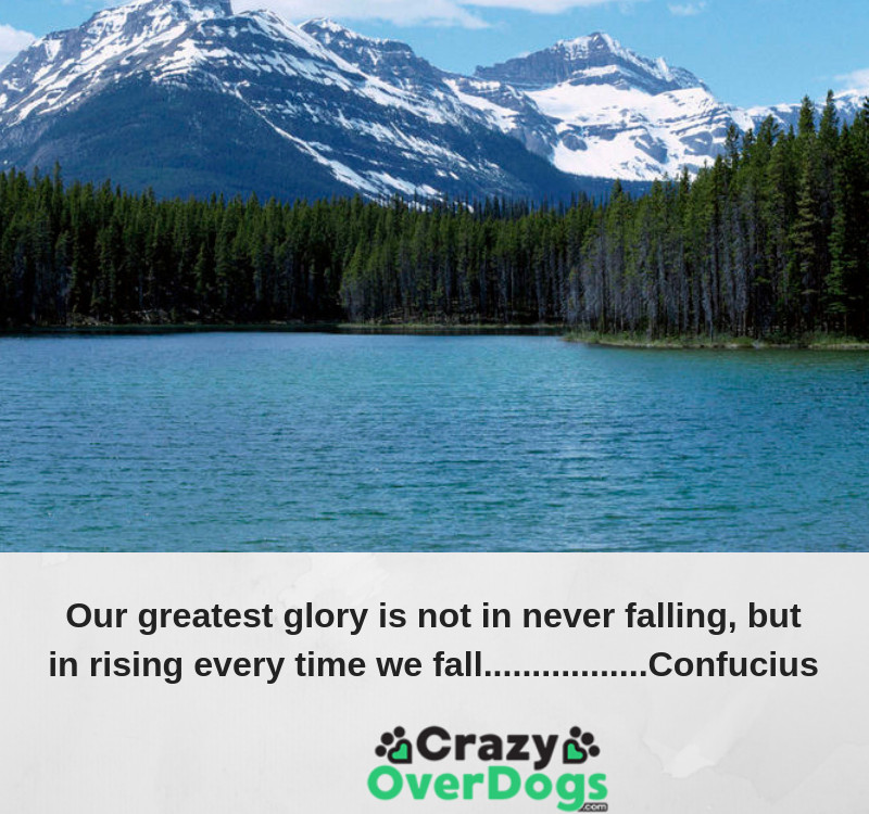 Our greatest glory is not in never falling, but in rising every time we fall. ..................Confucius
