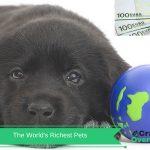 Fun Quiz - The Worlds Richest Pets