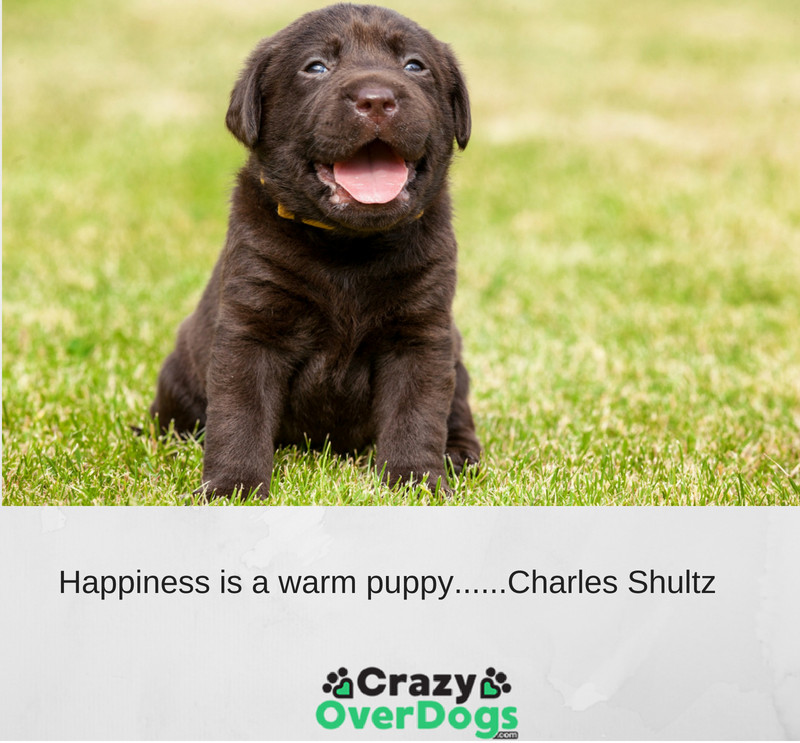 Happiness is a warm puppy...... Charles M. Schulz