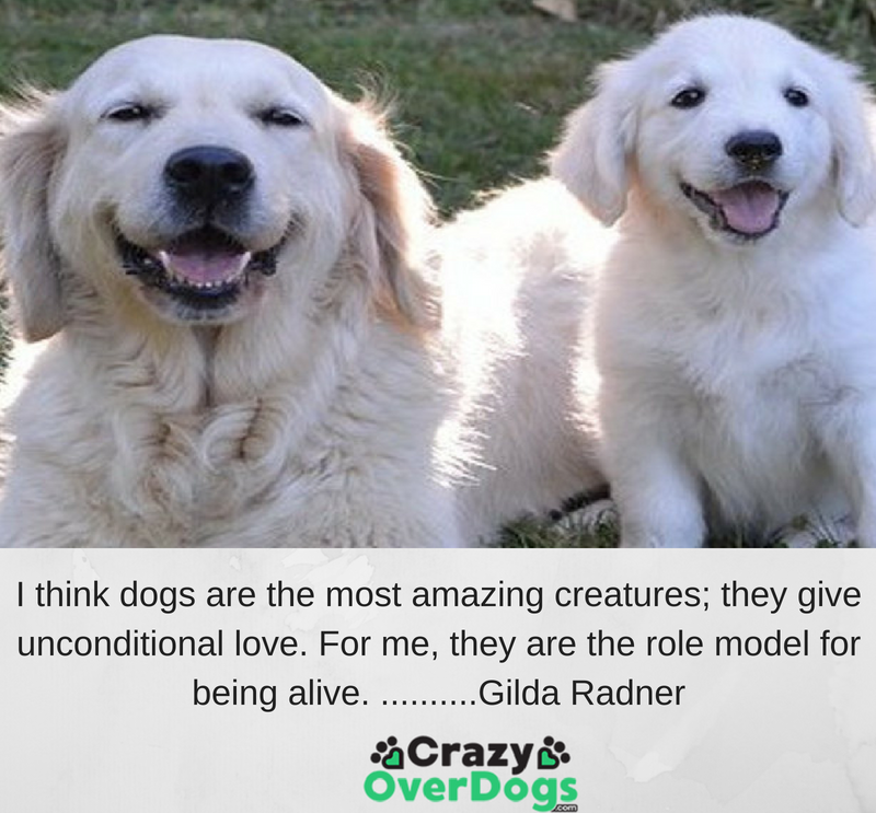I think dogs are the most amazing creatures; they give unconditional love. For me, they are the role model for being alive. ..........Gilda Radner