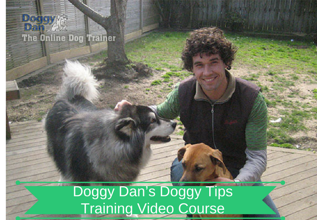 Doggy Dan's Doggy Tips Video Course