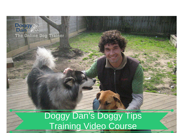 Doggy Dan's Doggy Tips Training Video Course