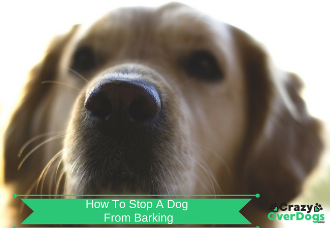 How To Stop A Dog From Excessive Barking