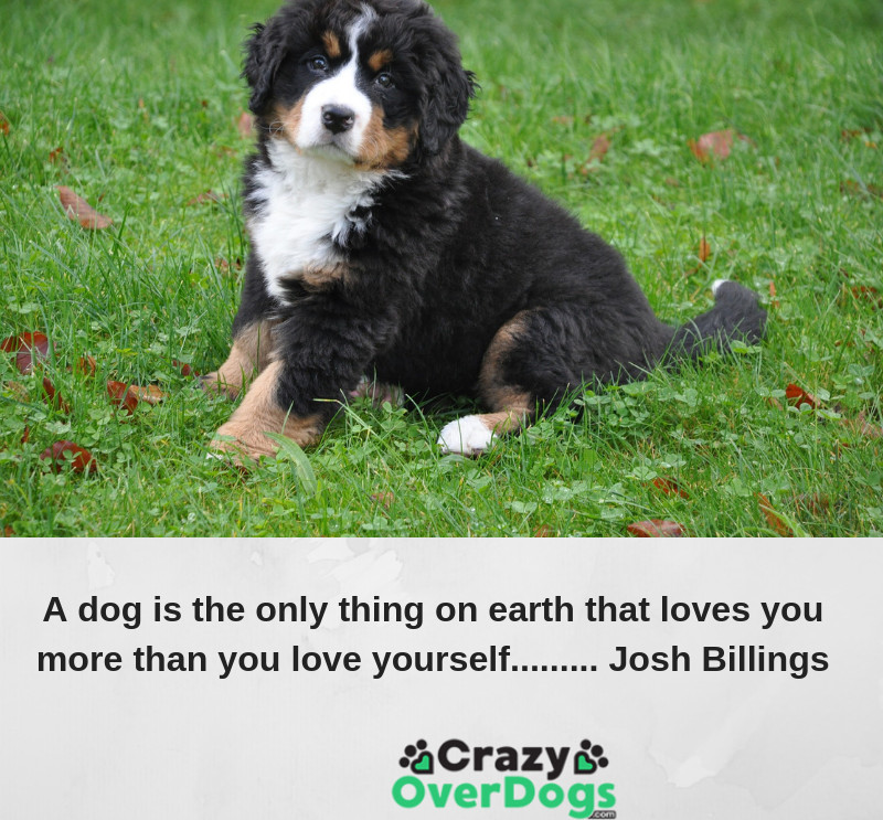 A dog is the only thing on earth that loves you more than you love yourself. ...Josh Billings