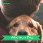 Adopting a Dog - Important Things To Consider.