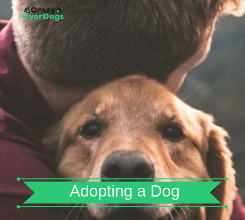 Important Things To Consider When Adopting a Dog