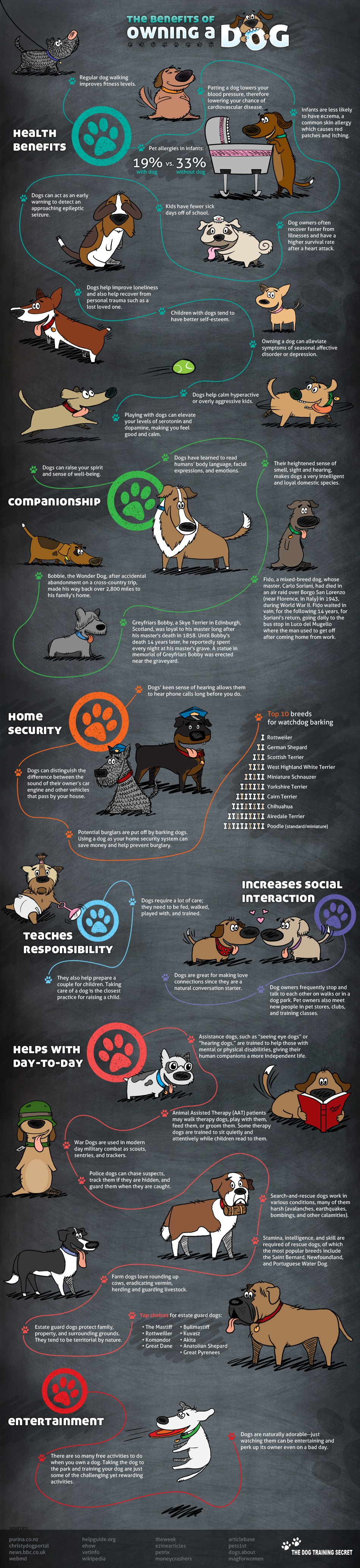 Discover The Amazing Health Benefits Of Owning a Dog