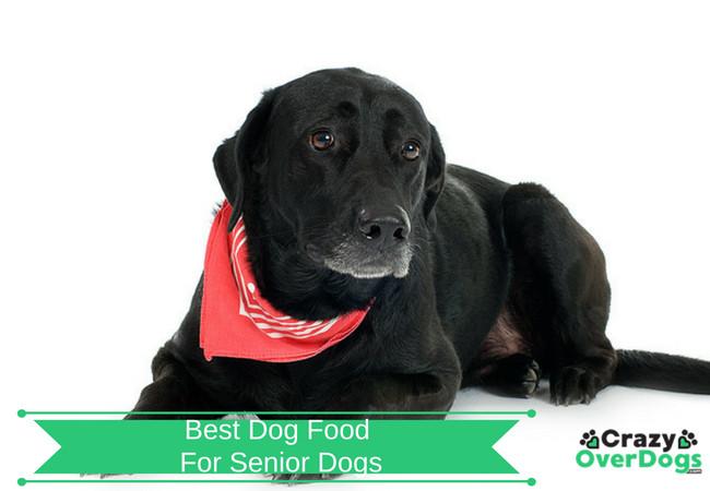 Best Dog Food For Senior Dogs