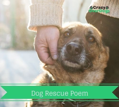 Dog Rescue Poem