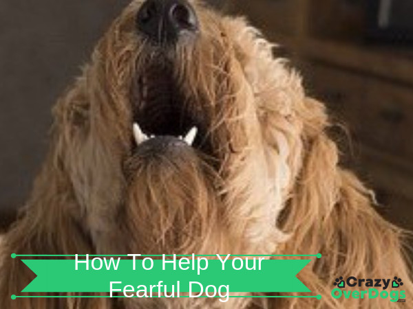 How To Help Your Fearful Dog