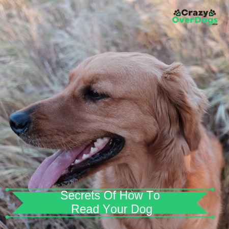 Secrets Of How To Read Your Dog
