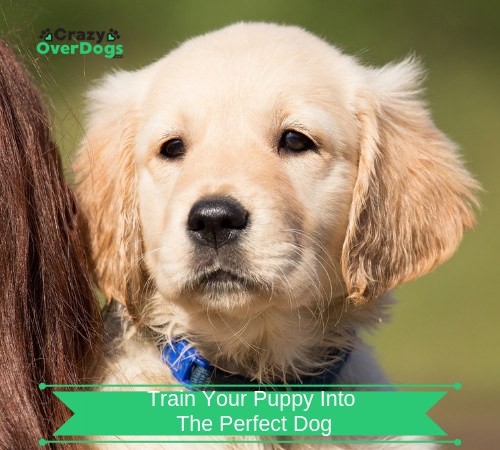 Train Your Puppy Into The Perfect Dog - Learn The Secrets