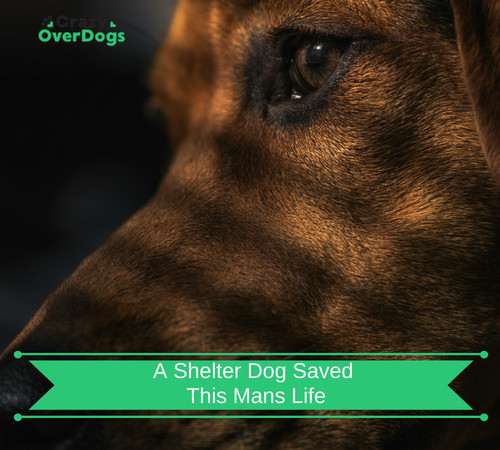 A Shelter Dog Saved This Man's Life