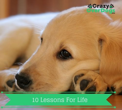 10 lessons for life - What Dogs Can Teach Us