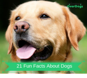 21 Fun Facts About Dogs - Do You Know Any Of Them