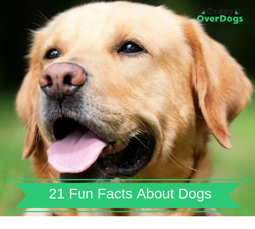 21 Fun Facts About Dogs