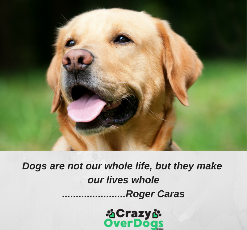 Dogs are not our whole life, but they make our lives whole...........Roger Caras