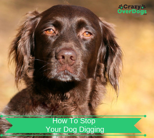 How To Stop Your Dog Digging