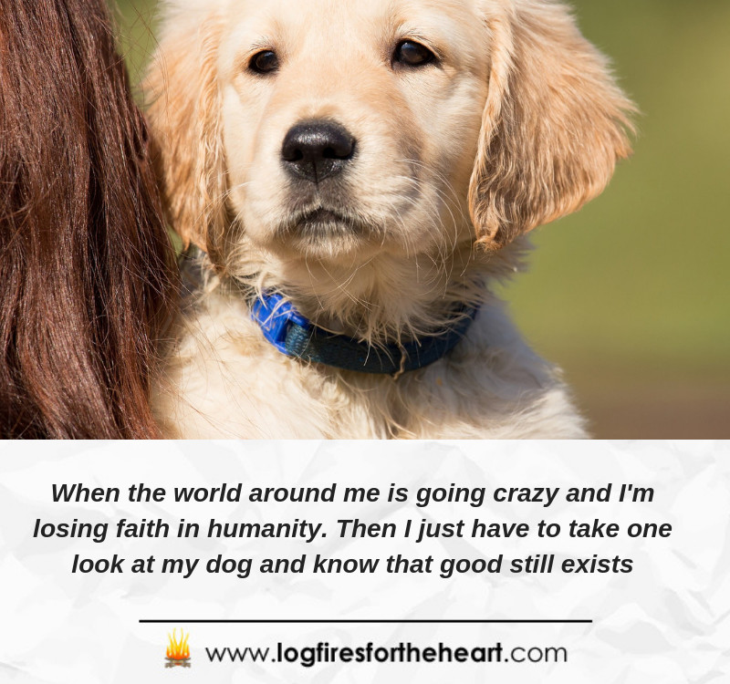 When the world around me is going crazy and I'm losing faith in humanity. Then I just have to take one look at my dog and know that good still exists.....Unknown