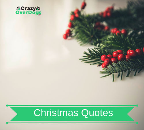christmas video quotes for dog lovers