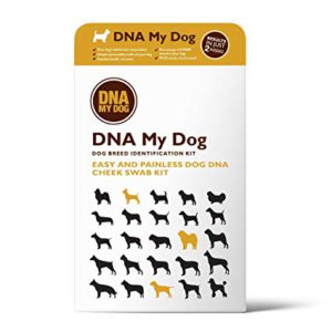 Best DNA Testing Kit For Dogs