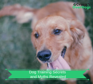 Dog Training Secrets and Myths Revealed