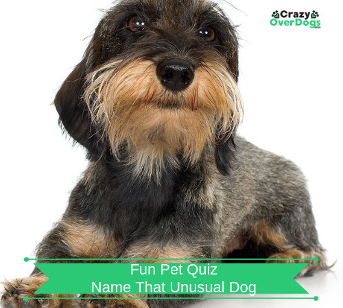 fun pet quiz - name that unusual dog
