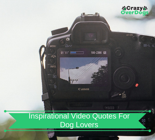 Inspirational Video Quotes For Dog Lovers